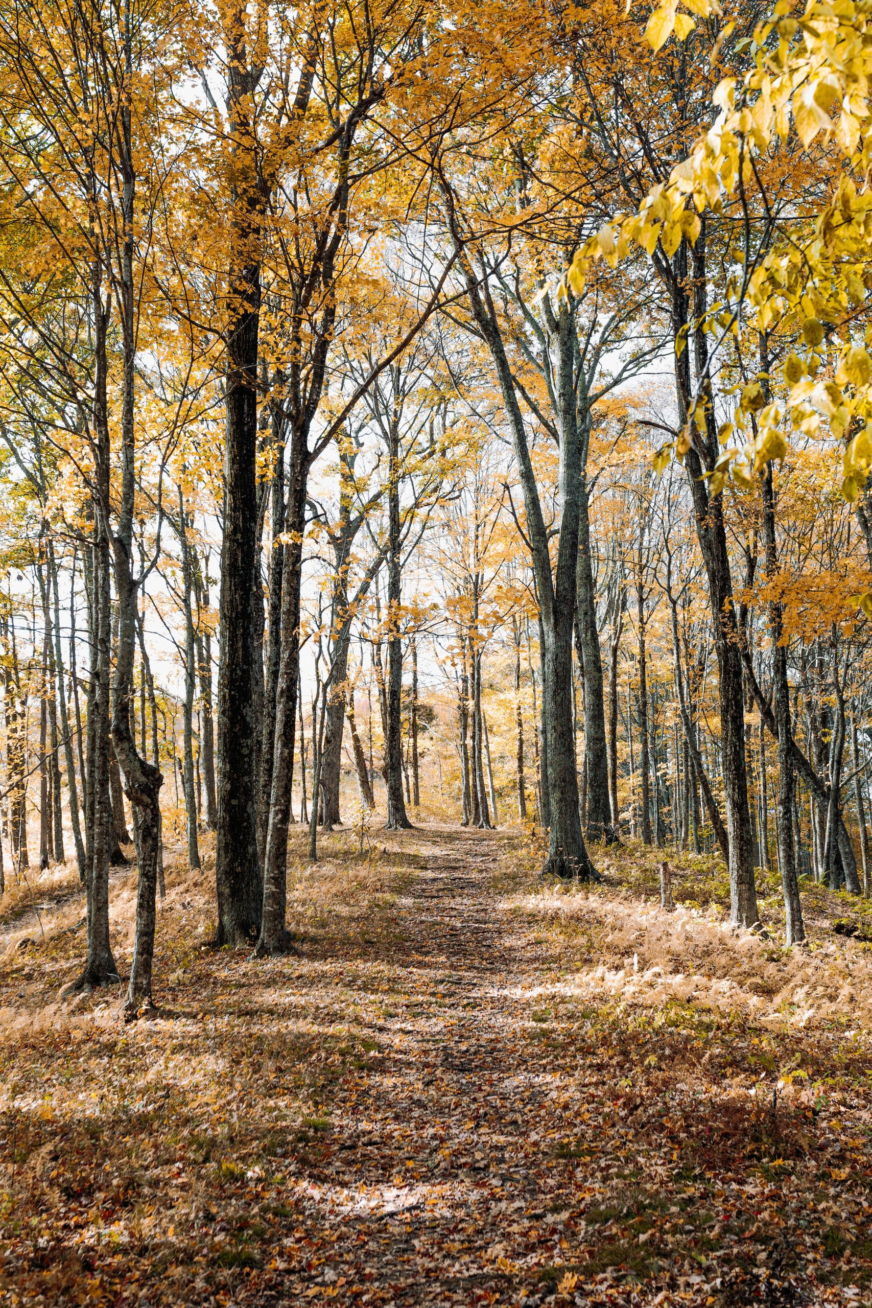 picture of trees